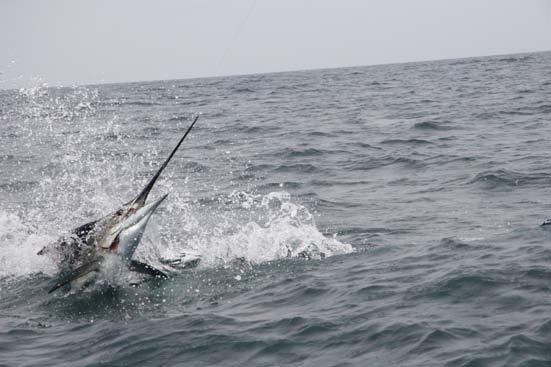 WHAT IS THE BILLFISH FOUNDATION?