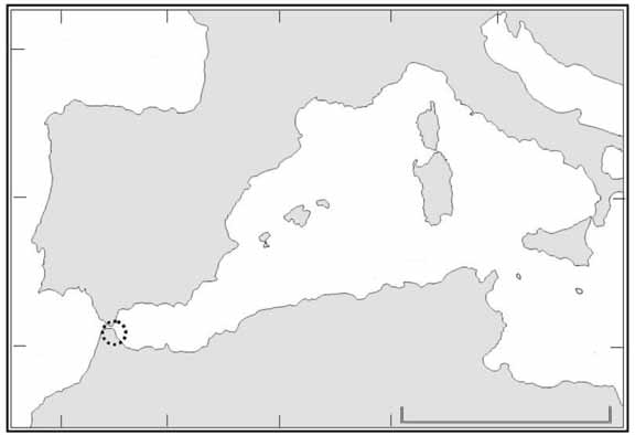 Sectors into which the study site was divided to estimate the total number of individuals of C. nigra. Fig. 1. A. Localización de Ceuta; B.