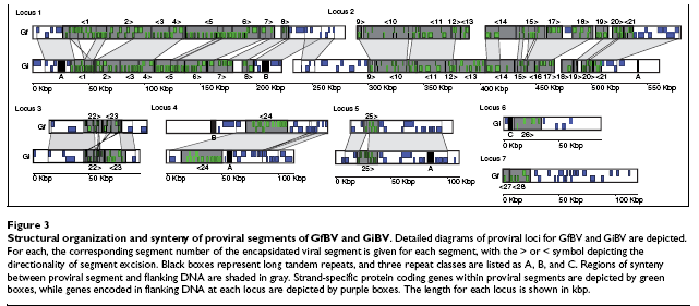 Structural organization and synteny of proviral segments of GfBV and GiBV.