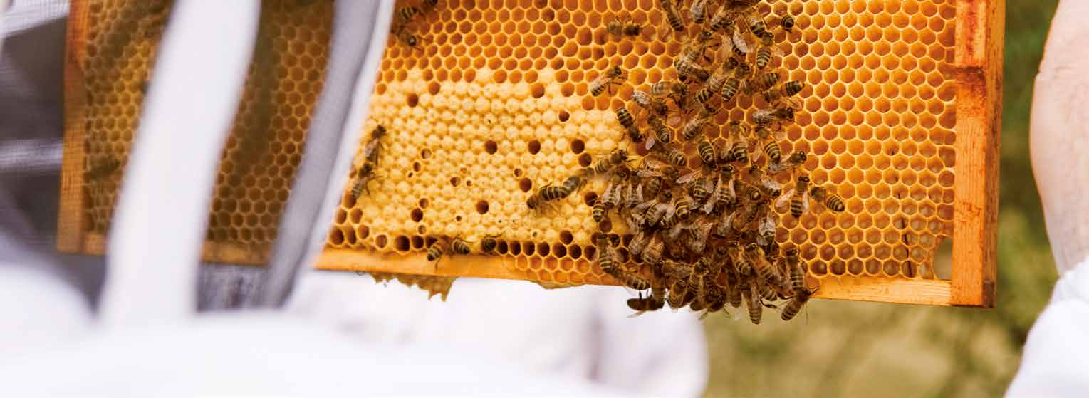 LA TENDENCIA ESTÁ CAMBIANDO? 7 Fuentes que se mencionan en el texto: 1 Report on Bee Health, Parliamentary Primary Production Select Committee, New Zealand Parliament (July 2014) http://www.