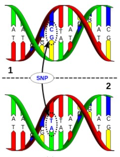 5. PROPUESTAS Automatic Genetic Sequences