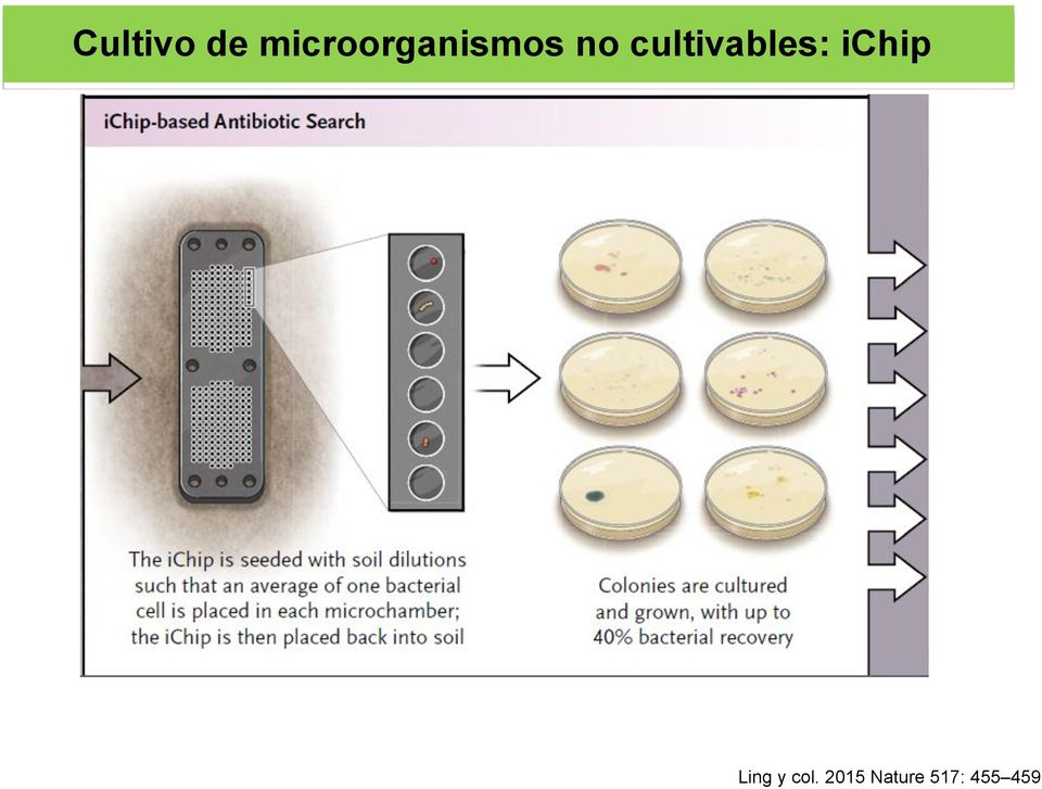 cultivables: ichip