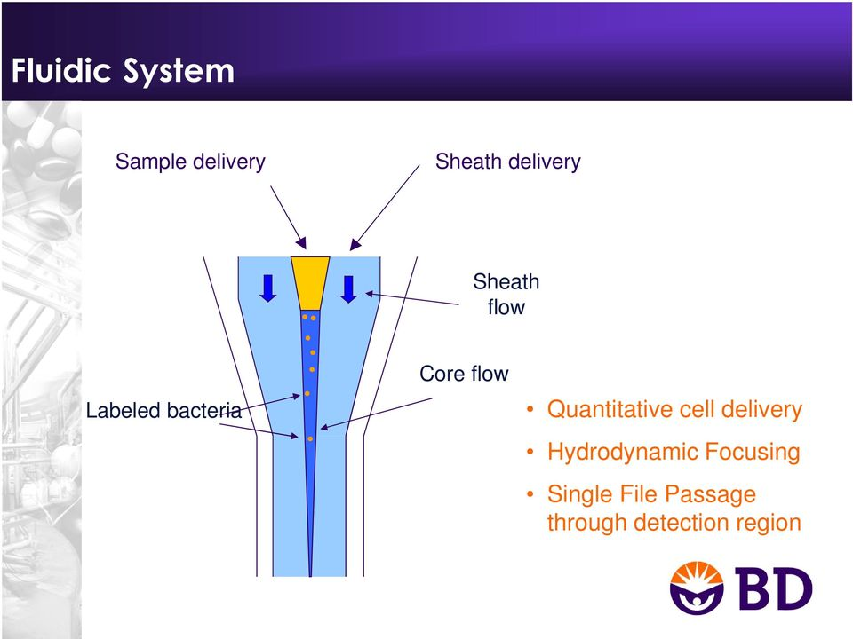 flow Quantitative cell delivery Hydrodynamic