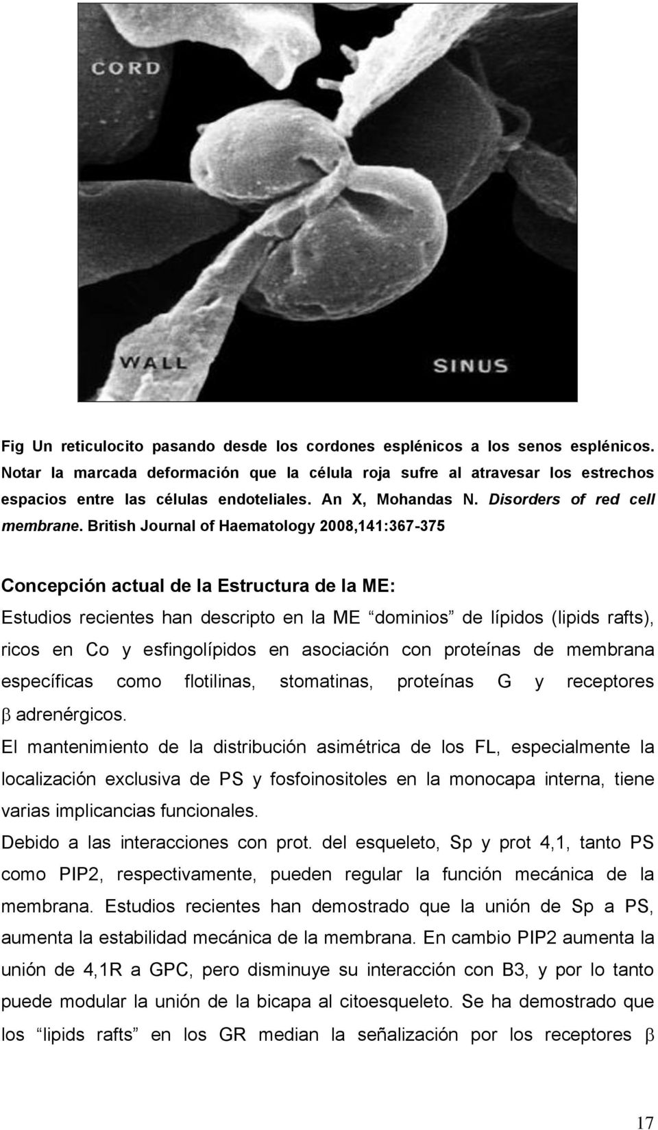 British Journal of Haematology 2008,141:367-375 Concepción actual de la Estructura de la ME: Estudios recientes han descripto en la ME dominios de lípidos (lipids rafts), ricos en Co y esfingolípidos