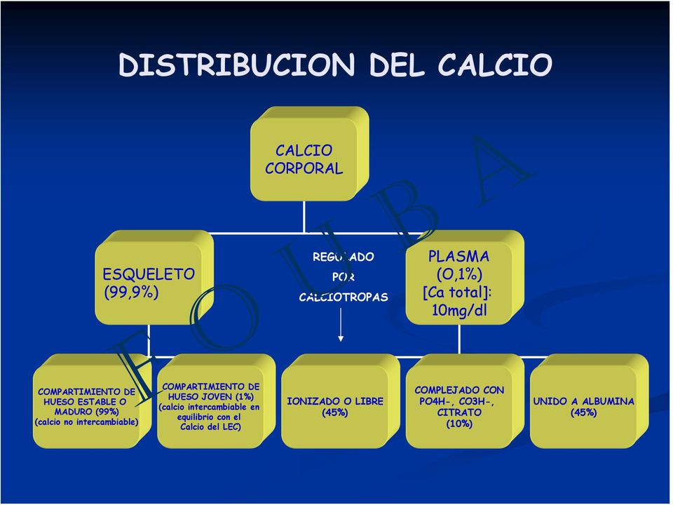 intercambiable) COMPARTIMIENTO DE HUESO JOVEN (1%) (calcio intercambiable en equilibrio con