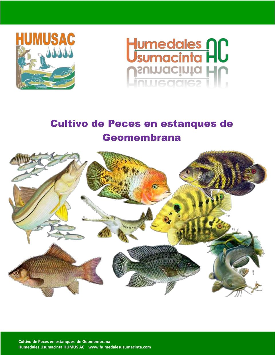 Cultivo de peces en estanques de geomembrana pdf for Precio de estanques de geomembrana para peces