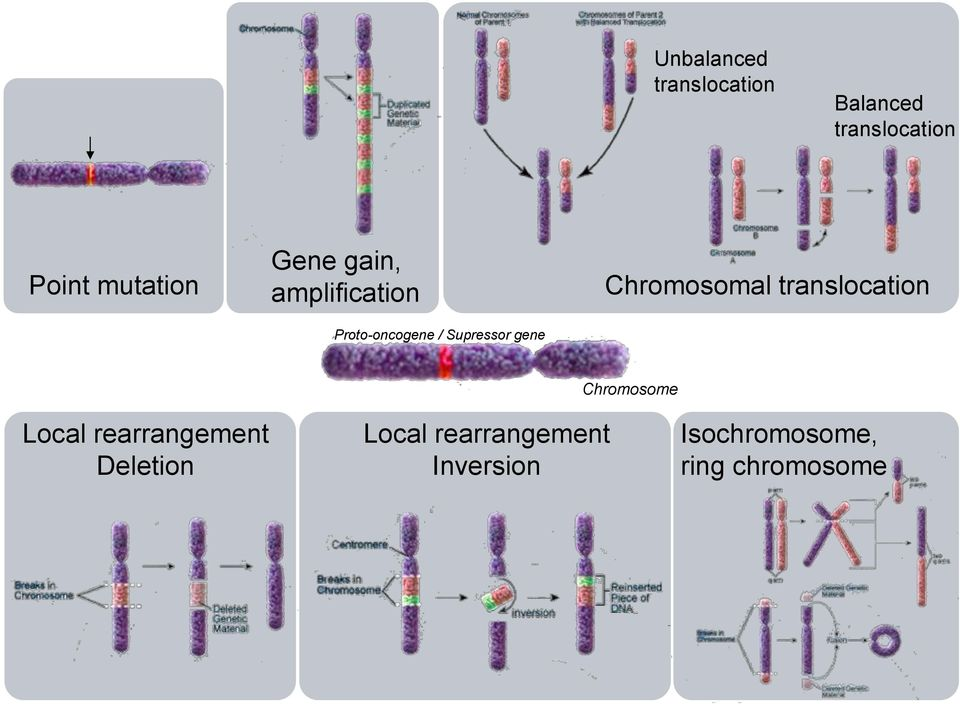 gene Chromosomal translocation Chromosome Local rearrangement