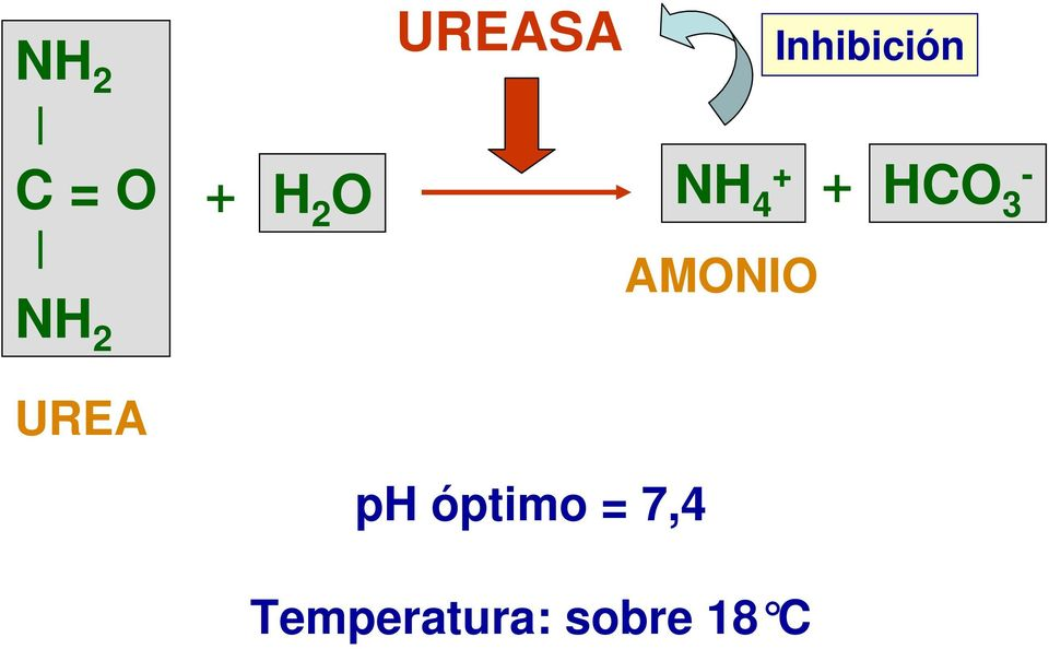 - 3 AMONIO UREA ph óptimo =