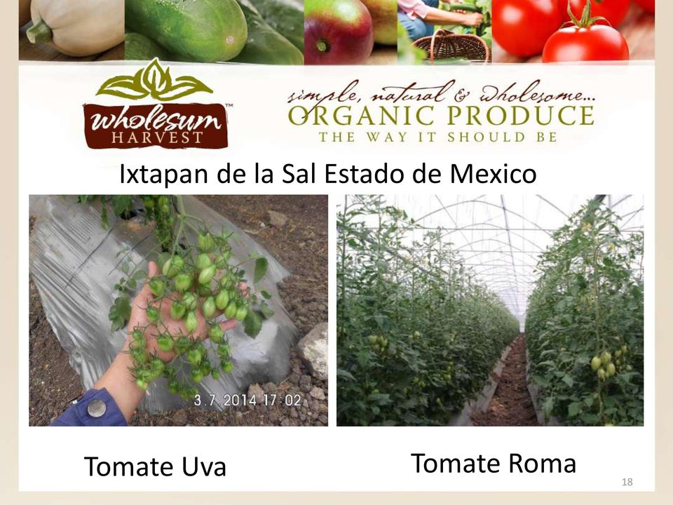 Mexico Tomate