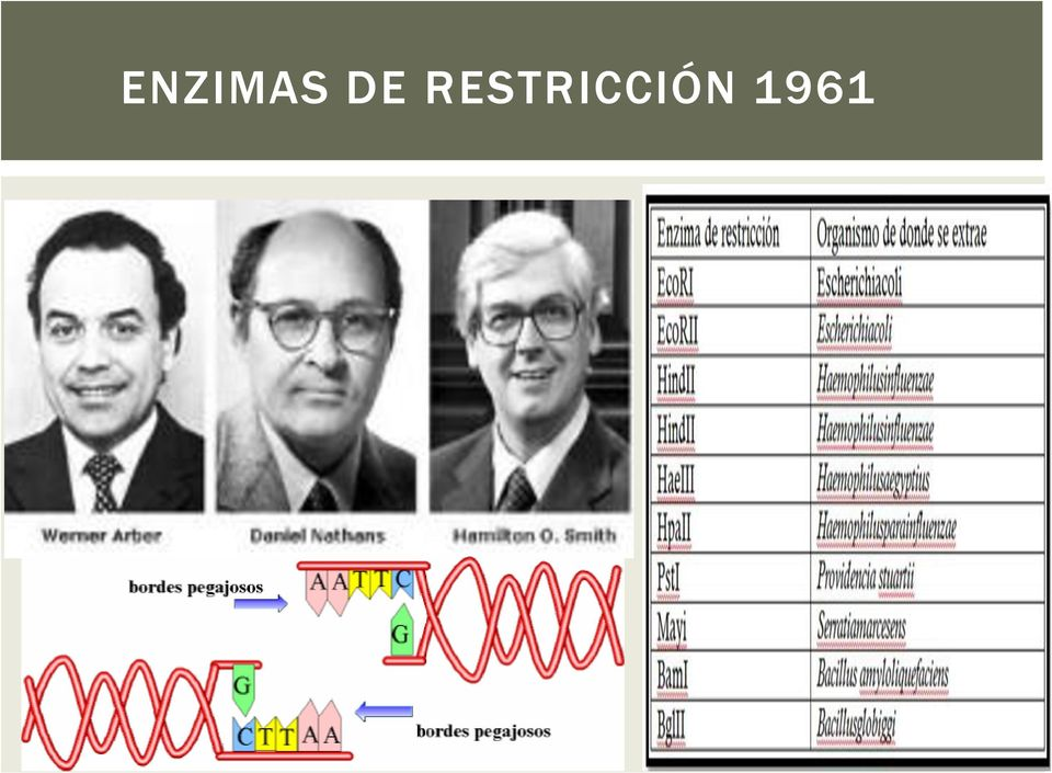 in 1973 stanley cohen and herbert boyer biology essay In 1973 stanley cohen, annie chang, robert helling, and herbert boyer demonstrated that if dna is fragmented with restriction endonucleases and combined with similarly restricted plasmid dna, the resulting recombinant dna molecules are biologically active and can replicate in host bacterial cells .