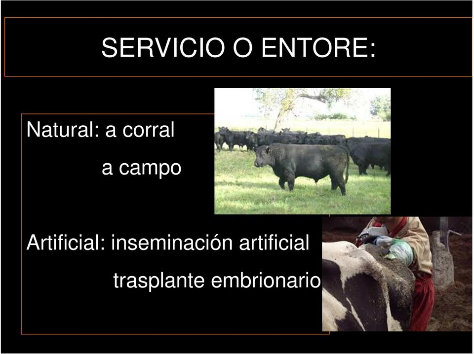 Artificial: inseminación