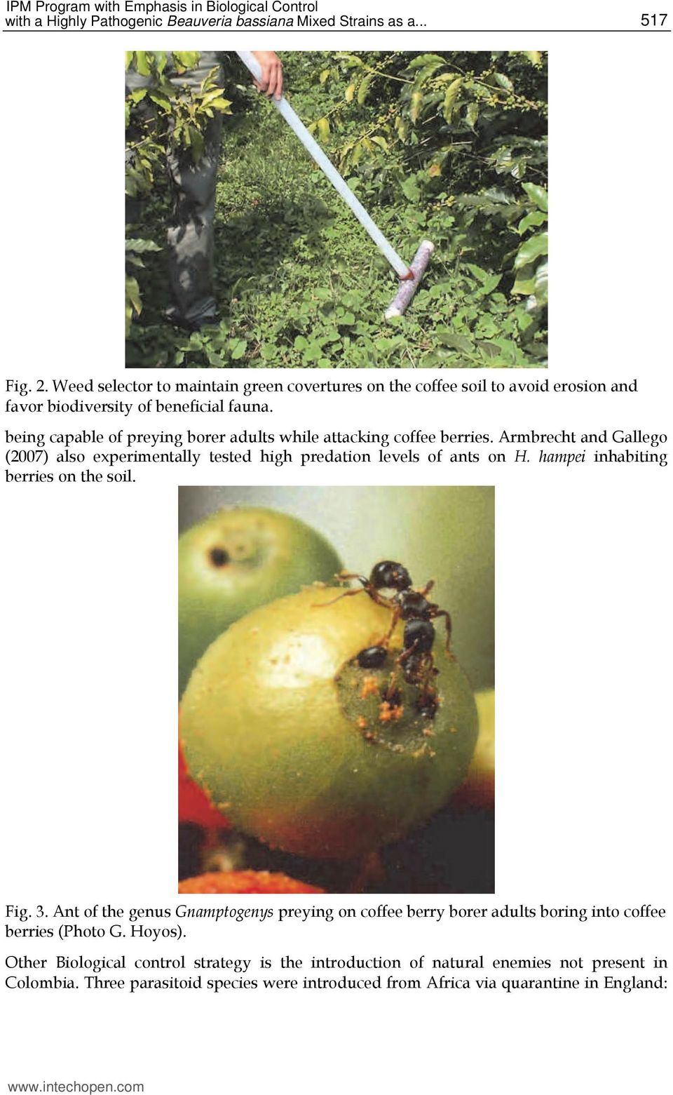 being capable of preying borer adults while attacking coffee berries. Armbrecht and Gallego (2007) also experimentally tested high predation levels of ants on H.