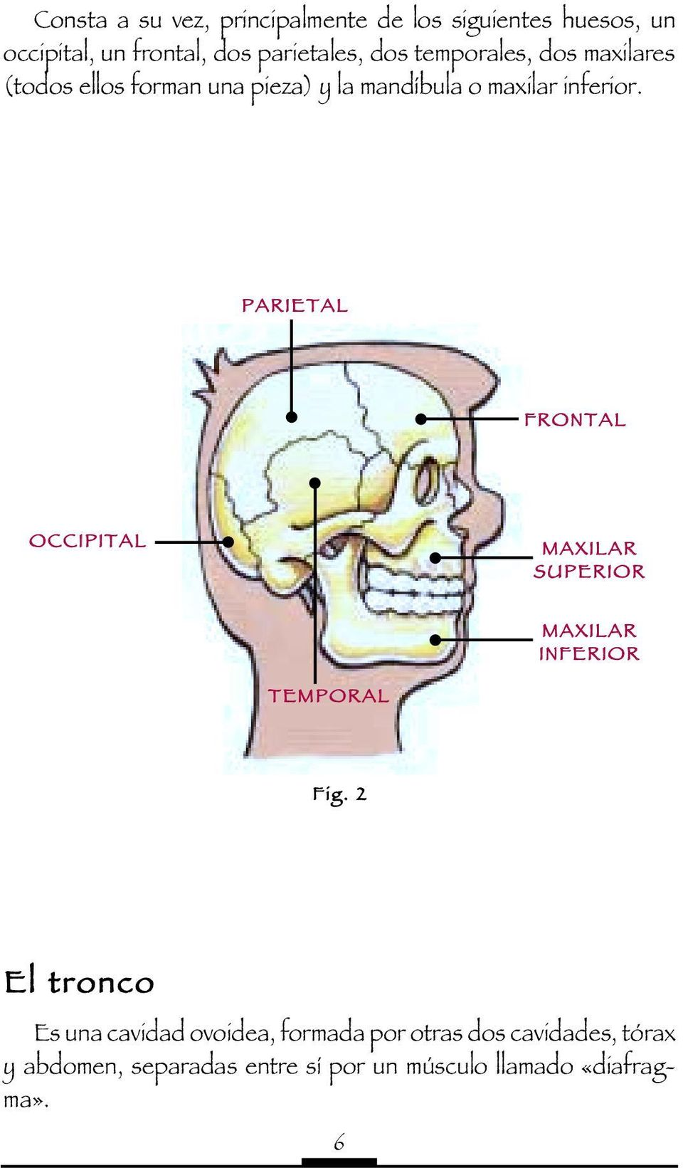 PARIETAL FRONTAL OCCIPITAL MAXILAR SUPERIOR MAXILAR INFERIOR TEMPORAL Fig.