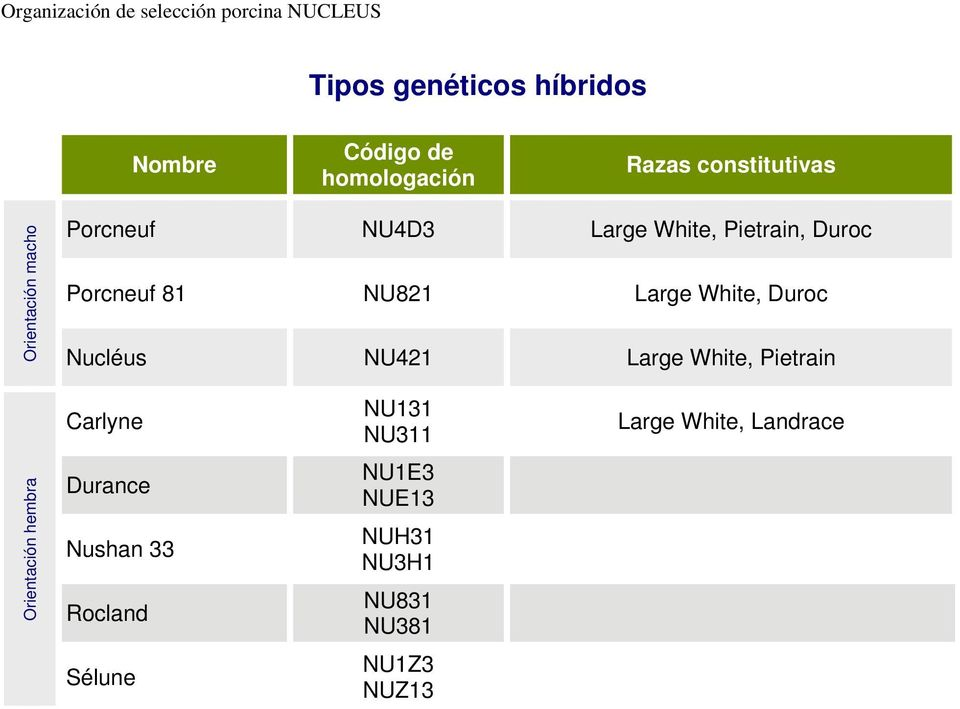 Large White, Pietrain hembra Carlyne Durance Nushan 33 Rocland Sélune