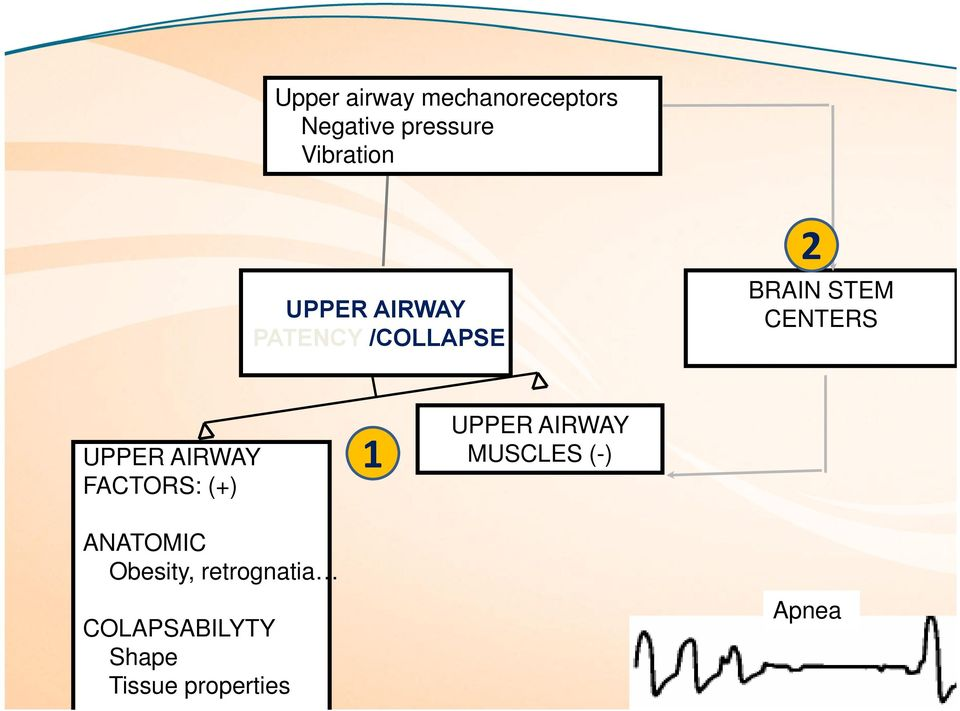 AIRWAY FACTORS: (+) 1 UPPER AIRWAY MUSCLES (-) ANATOMIC