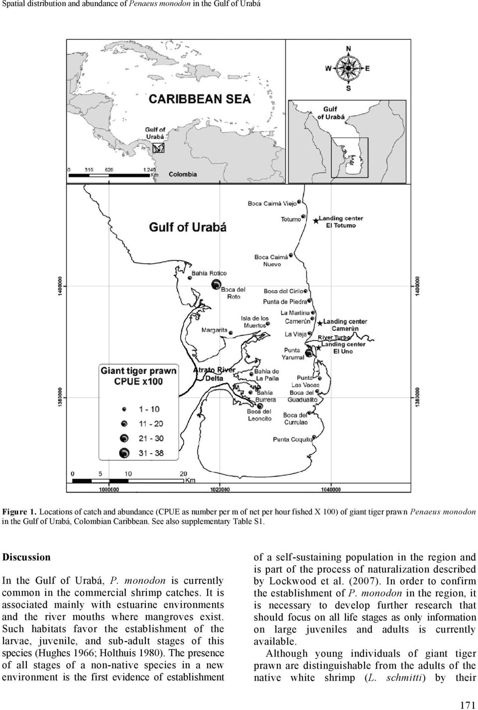 Discussion In the Gulf of Urabá, P. monodon is currently common in the commercial shrimp catches. It is associated mainly with estuarine environments and the river mouths where mangroves exist.