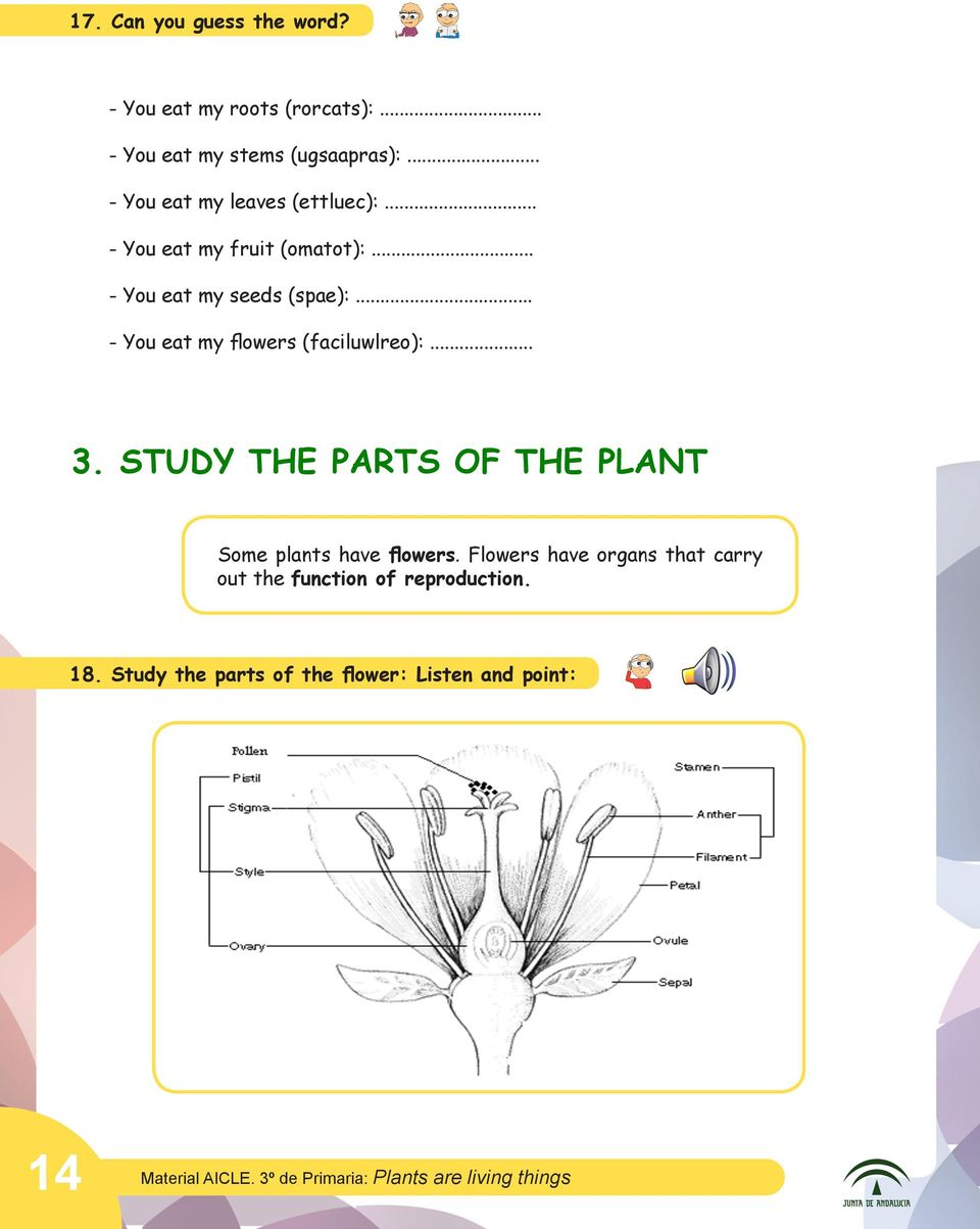 .. - You eat my flowers (faciluwlreo):... 3. STUDY THE PARTS OF THE PLANT Some plants have flowers.