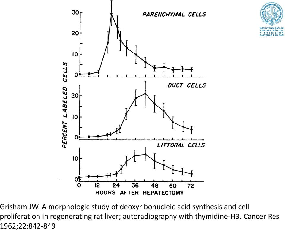 synthesis and cell proliferation in