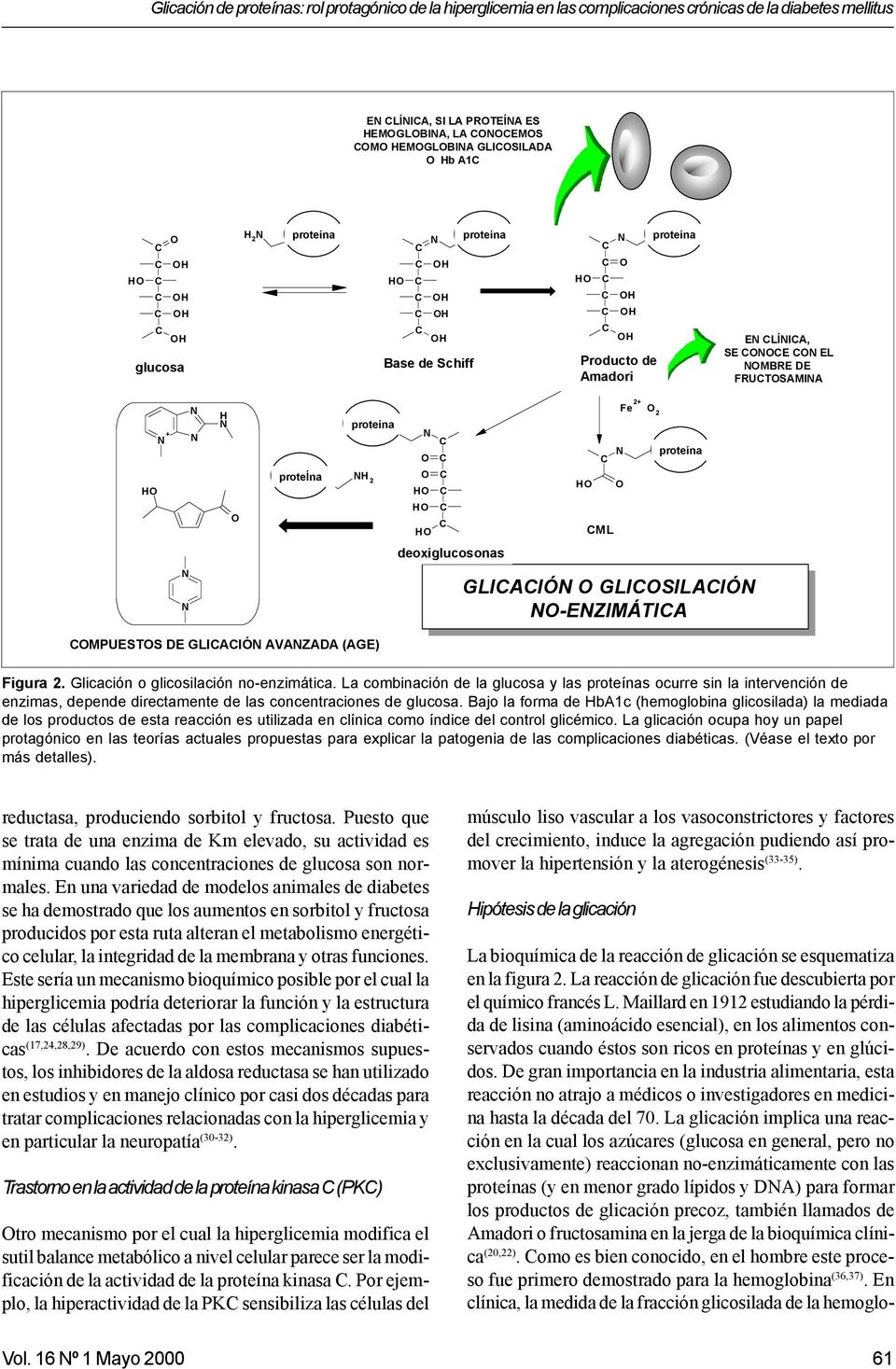 amine) fructosamine Measured EN LÍNIA, Measured in in SE ONOE plasma ON EL plasma proteins NOMBRE FRUTOSAMINA proteins HO N + N N N N H N O proteína protein Advanced Glycation Endproducts (AGE)