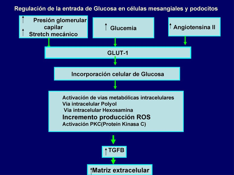 Activación de vias metabólicas intracelulares Via intracelular Polyol Via intracelular