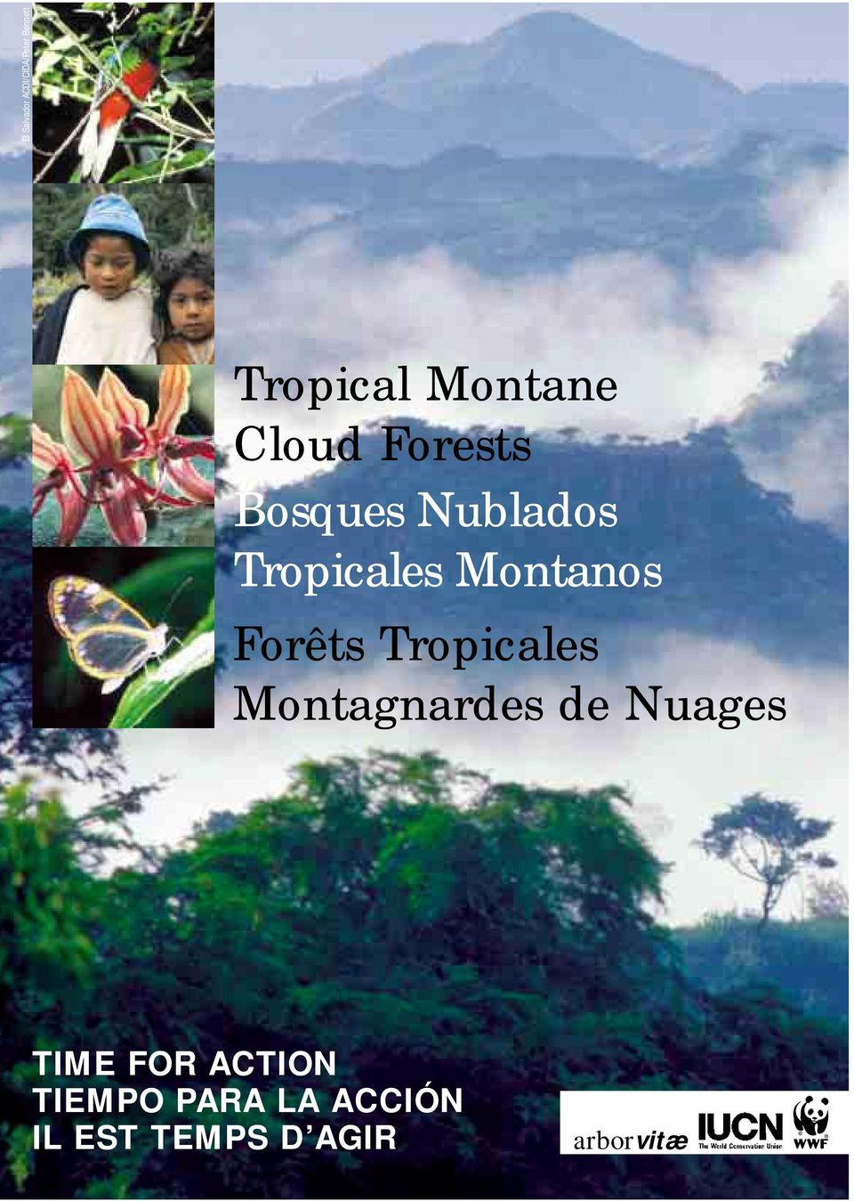 Forêts Tropicales Montagnardes de Nuages TIME FOR