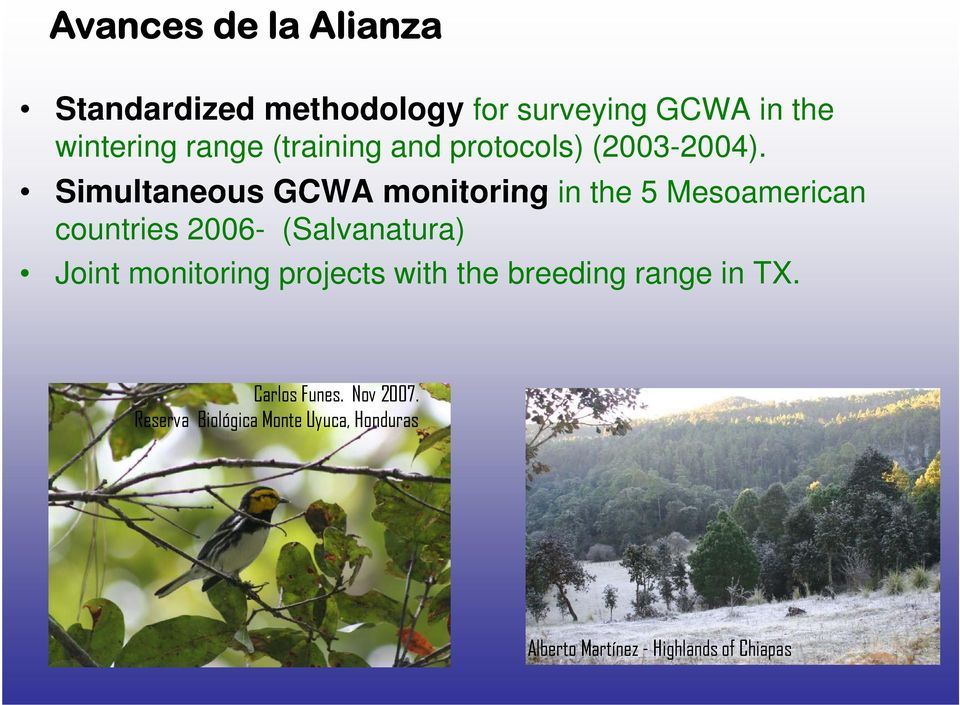 Simultaneous GCWA monitoring in the 5 Mesoamerican countries 2006- (Salvanatura) Joint