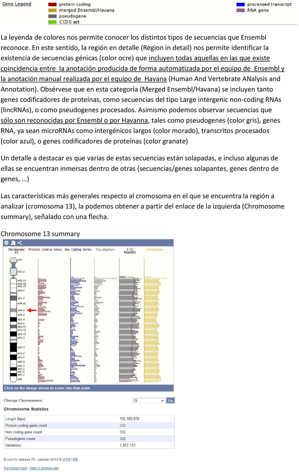 anotación producida de forma automatizada por el equipo de Ensembl y la anotación manual realizada por el equipo de Havana (Human And Vertebrate ANalysis and Annotation).