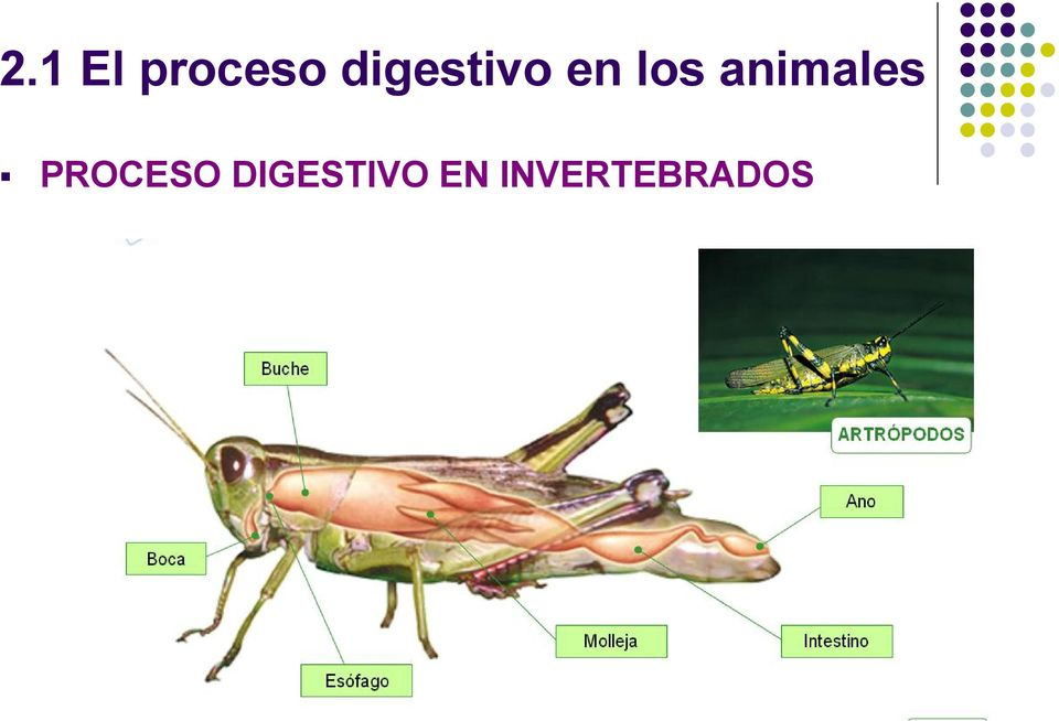 animales PROCESO