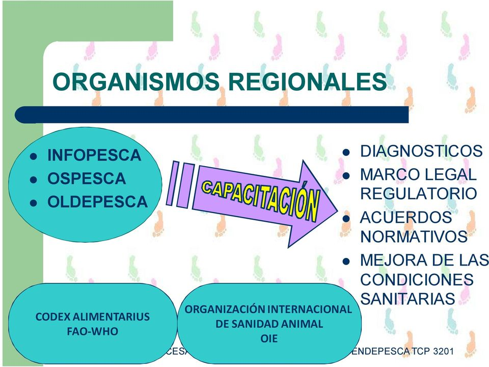 DE SANIDAD ANIMAL OIE DIAGNOSTICOS MARCO LEGAL