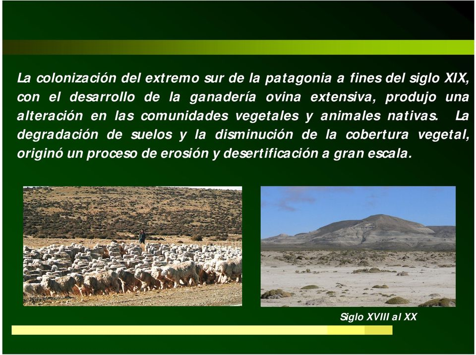 vegetales y animales nativas.