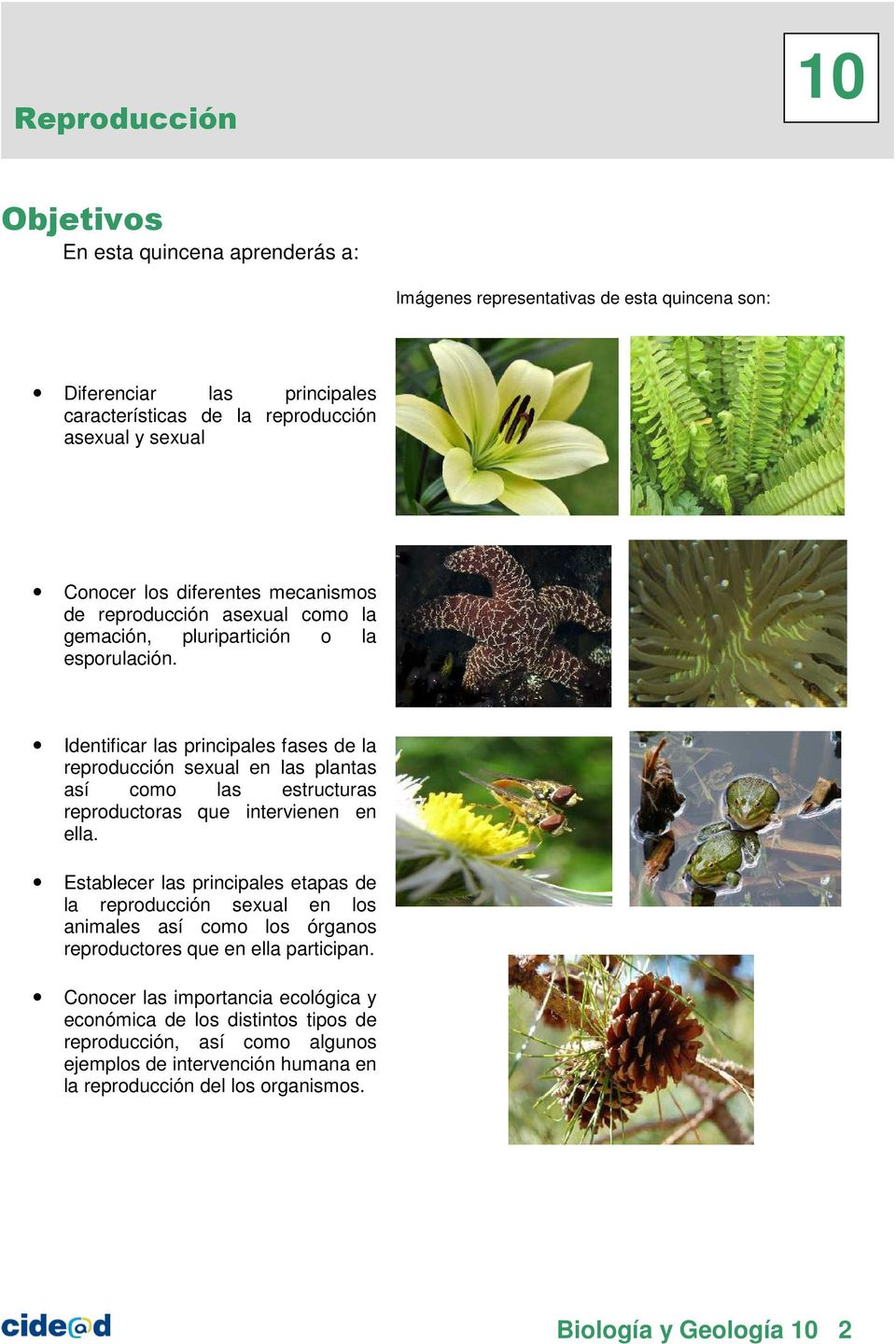 Reproduccion asexual de las plantas pdf to word