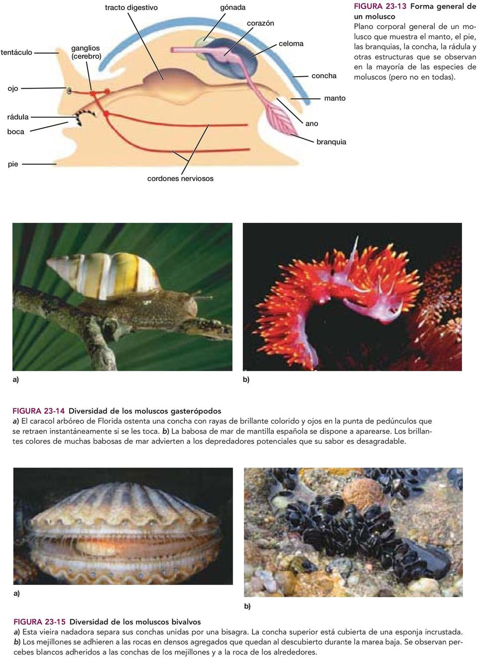 Diversidad Animal I Invertebrados Pdf Free Download